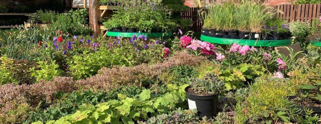 акции садового центра азбука сада